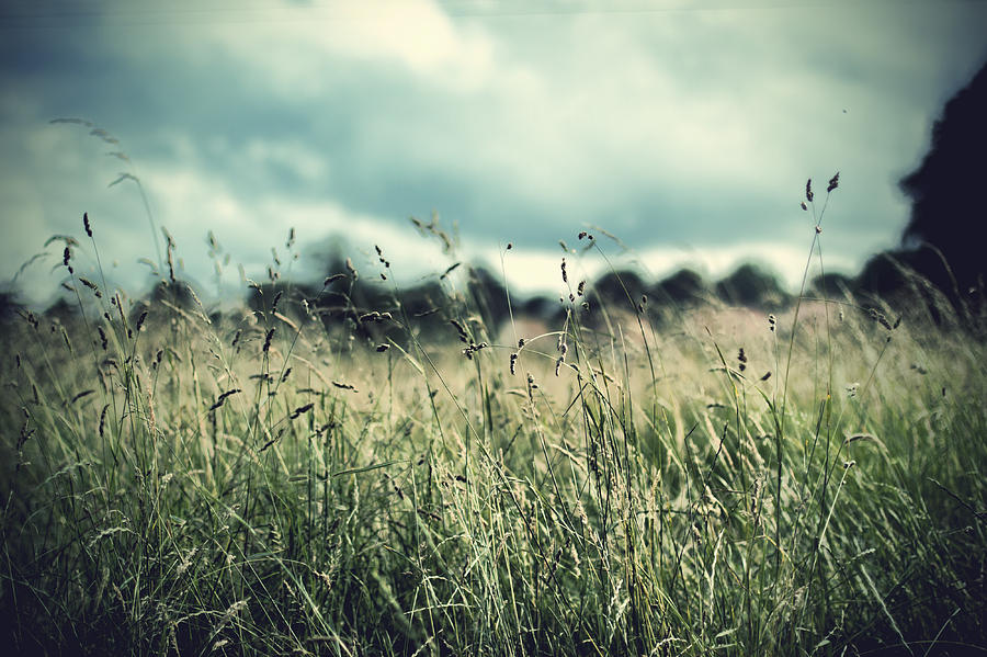 hay-field-in-july-ethiriel-photography